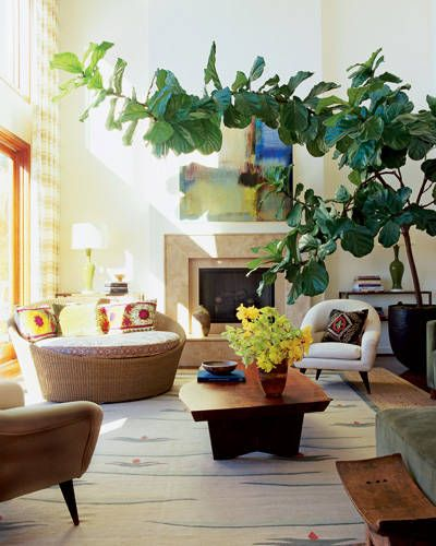 fiddle-leaf-5